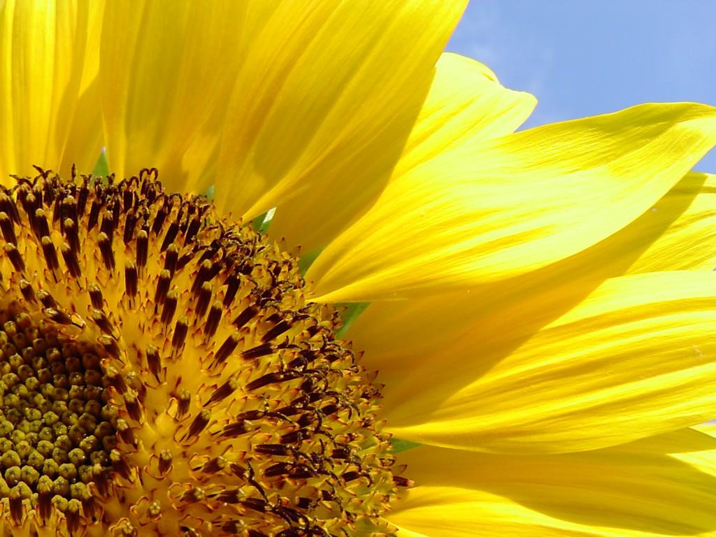 Pozadie - kvety