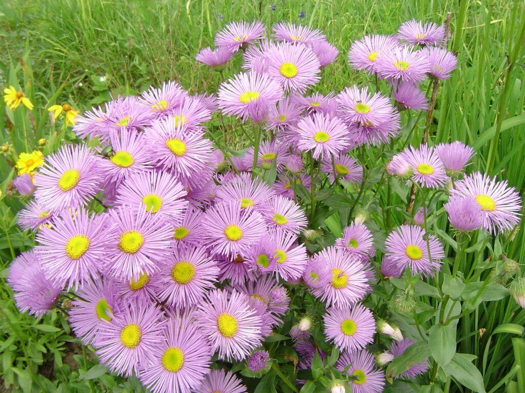 www.pasztor.name :: Pozadie - kvety